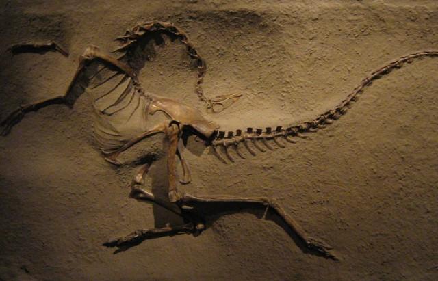 ornithomimus1