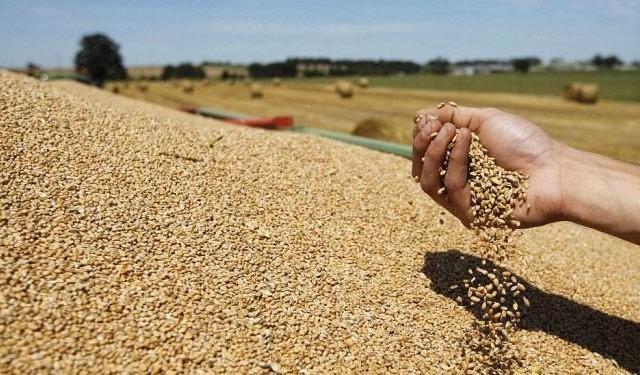 الفاو تتوقع تحسن إنتاج الحبوب في 2013