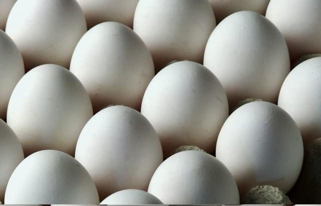 oeuf-de-poules-fraicheur-blanc