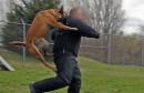 Police_dog_attack