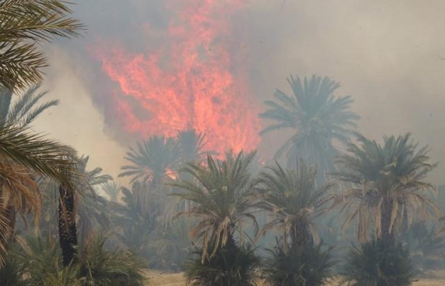 حريق-بالواحة-القديمة-بحامة-الجريد-يأتي-على-100-نخلة