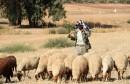 TUNISIA-AGRICULTURE