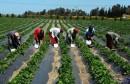 almaghribtoday-العاملات-في-قطاع-الفلاحة