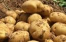 egyptian-potato-reuters-31102017-780x405